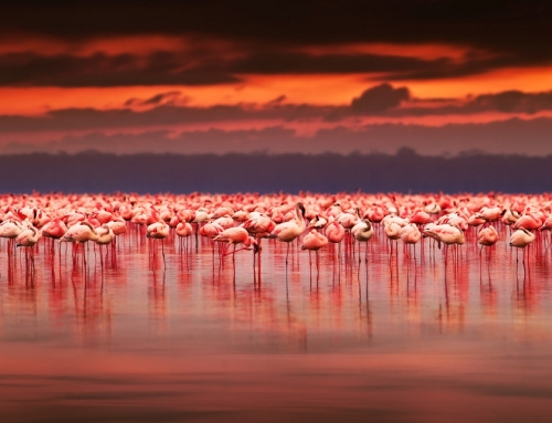 12 Day Lands of The Migration: Kenya and Tanzania