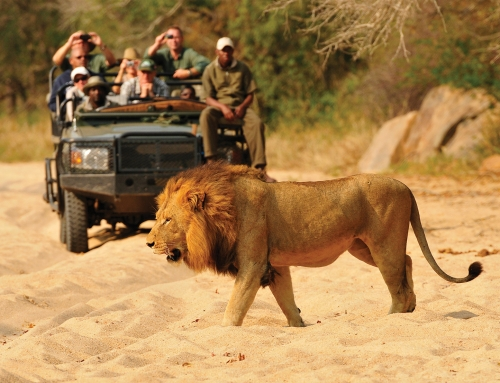 4 Day Inyati Private Game Lodge Fly-In Safari Package| Sabi Sands Game Reserve, South Africa