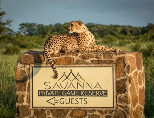 4 Day Fly-In Savanna Private Game Reserve – Sabi Sands Game Reserve, South Africa