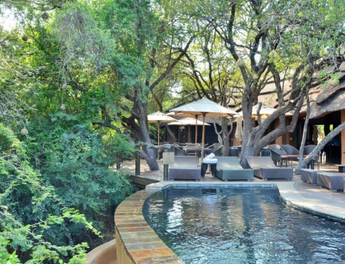 Motswiri Private Safari Lodge – Madikwe Game Reserve